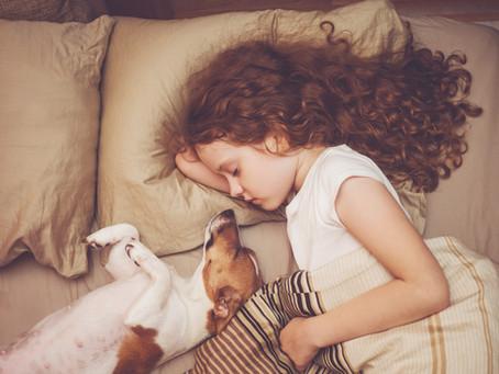 Dormir avec son chien, bonne ou mauvaise idée ?
