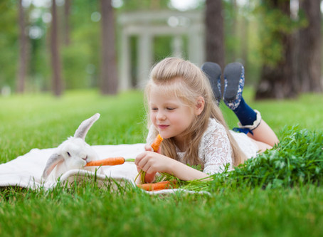 Aujourd'hui, zoom sur les dents du lapin !