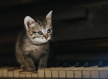 Le monde animal... des infos pas banales : Savez-vous que votre animal aime la musique ?