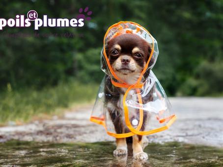 Petits manteaux pour chiens.