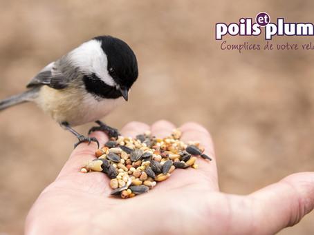 Comment venir en aide aux oiseaux pendant l'hiver ?