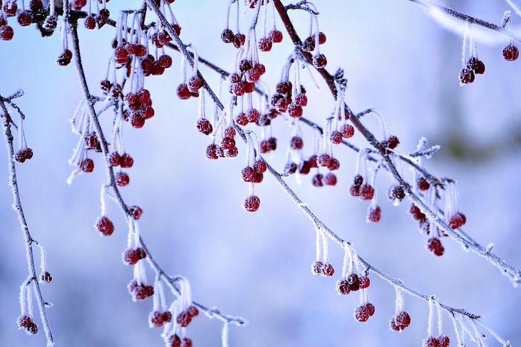 Frozen%2520Berries_edited_edited.jpg