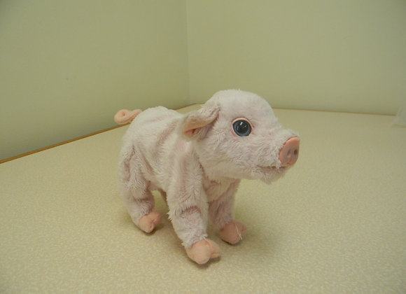 Small Pink Pig