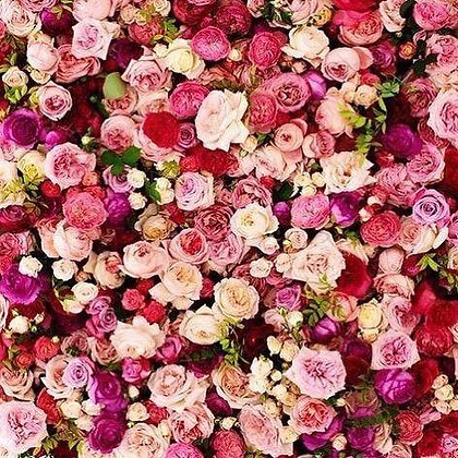 Red and Pink Flower Wall Backdrop