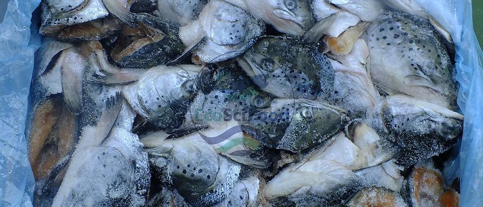 Salmon Head 400+