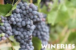 consumer-wineries