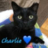 CHARLIE V4V.jpeg