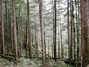 Oregon: Portland + Eugene