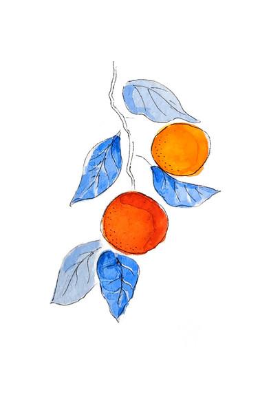 Watercolor Study - Orange Sprig