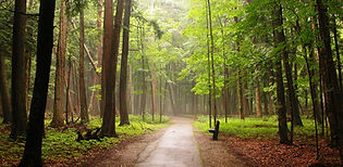 Hartwick Pines Trail.jpg