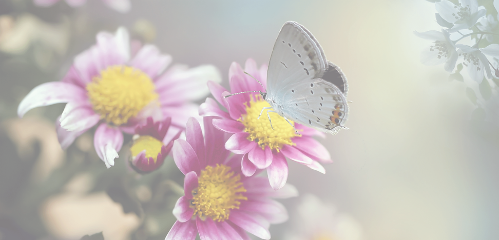 Butterfly BG 22.png