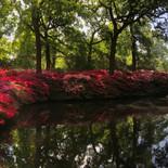 Isabella Plantation Richmond Park, UK