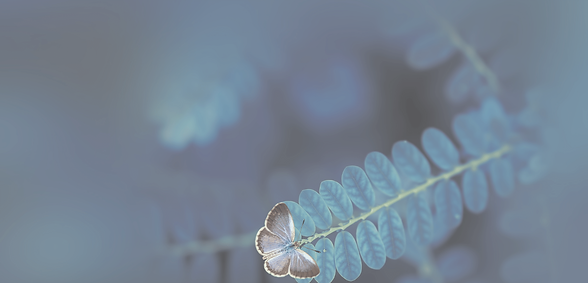 Butterfly BG 2.png