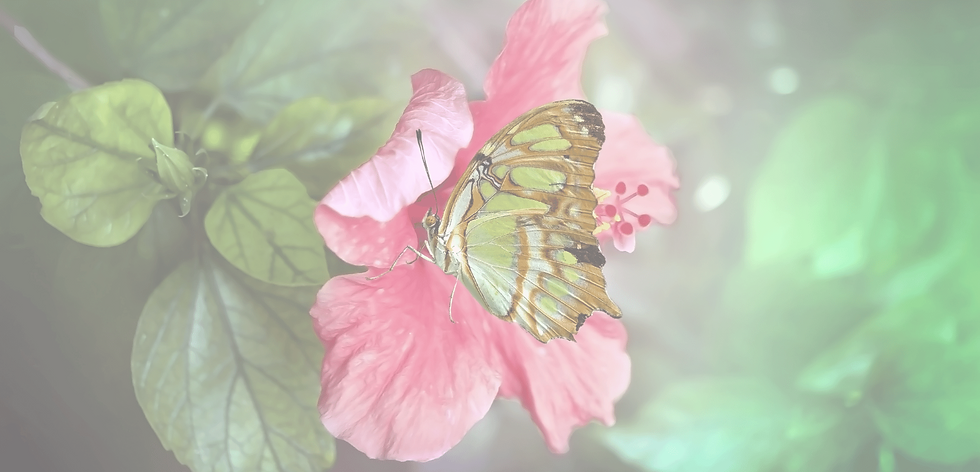 Butterfly BG 8.png