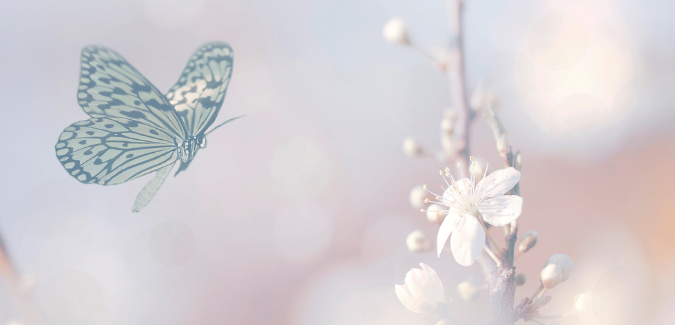 Butterfly BG 13.png