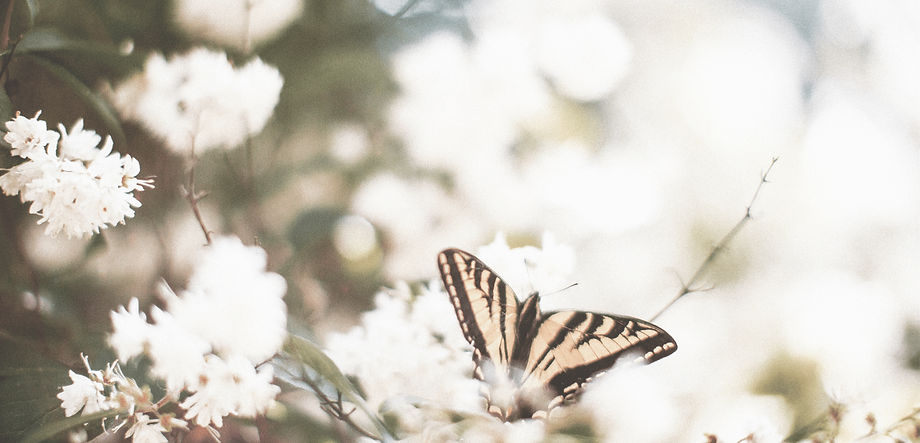 Butterfly BG 6.png