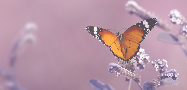 Butterfly BG 3.png