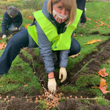 Putney Rotary plants 3200 crocuses with Wandsworth Council and Friends of Wandsworth Park