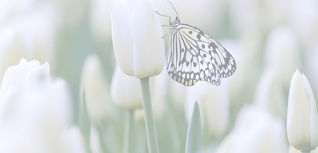 Butterfly BG 17.png