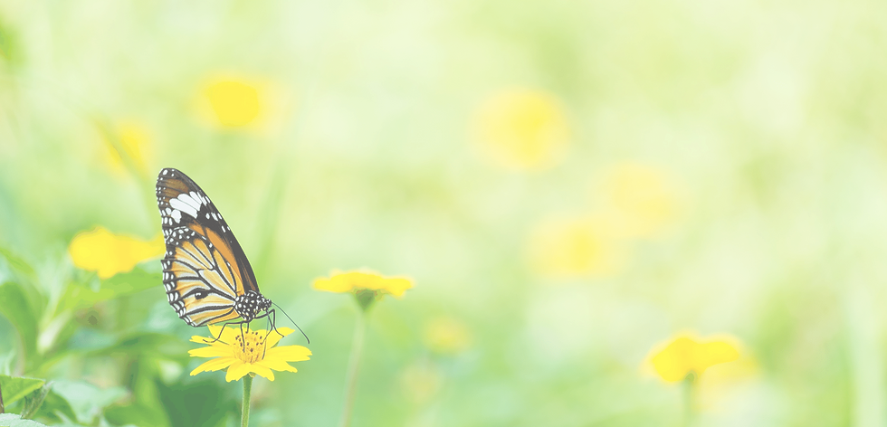 Butterfly BG 16.png