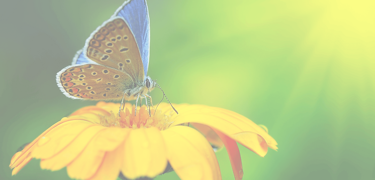 Butterfly BG 1.png