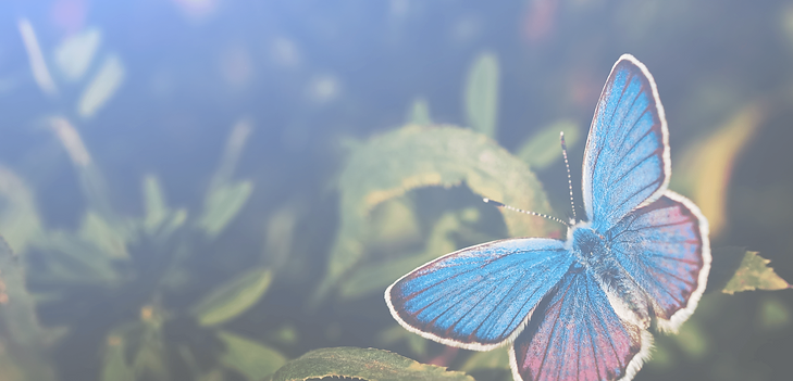 Butterfly BG 4.png