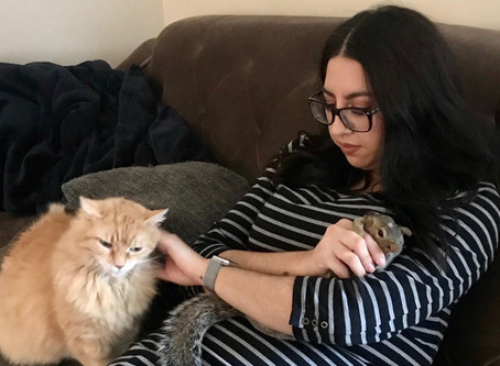 Our Evolving Relationship with Pets -A Furry Family
