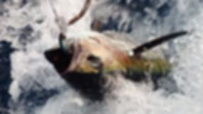 Grand large, Club de croisière, faire de la voile, apprendre la voile, croisière à la voile, croisière en catamaran, Transatlantique, transat, traversée de l'Atlantique, thon, pêche au thon