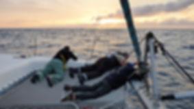 Grand large, Club de croisière, faire de la voile, apprendre la voile, croisière à la voile, croisière en catamaran, Transatlantique, transat, traversée de l'Atlantique, dauphins