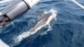 Grand large, Club de croisière, faire de la voile, apprendre la voile, croisière à la voile, croisière en catamaran, Transatlantique, transat, traversée de l'Atlantique, baleine