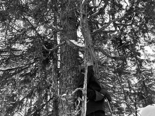 Ikke bare et tre i skogen