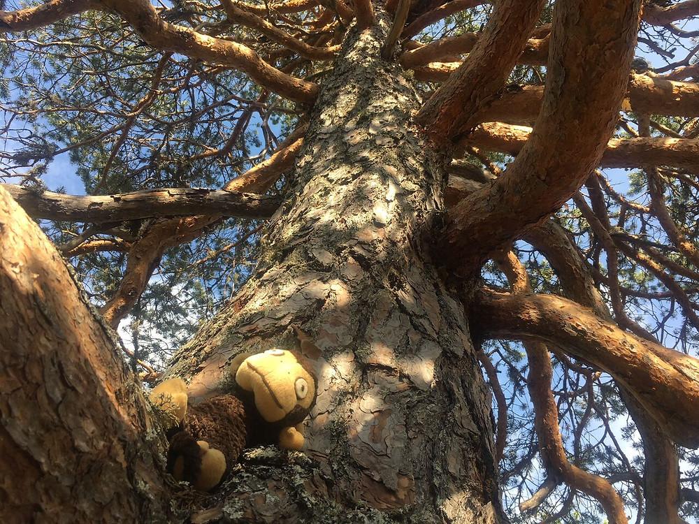 Bilde av en apekatt i et tre. Apekatten er et tøykosedyr.