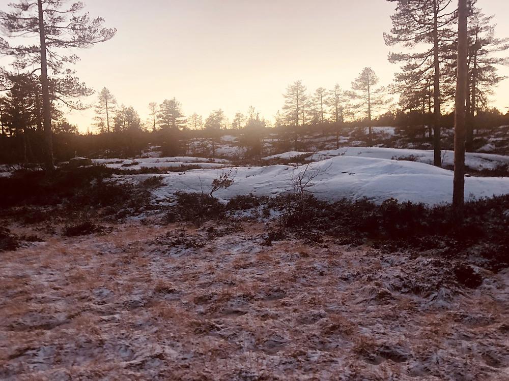 Barfrost -myr og åpen furuskog