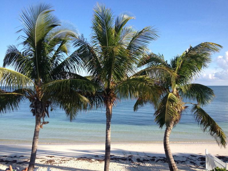 CC-10-Beach-Palm-Trees-796x597