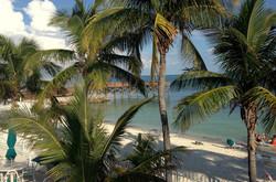 CC-10-Beach-Palm-Trees-1-796x527