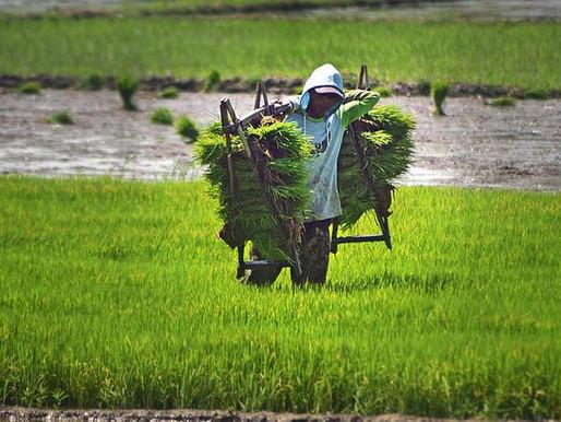 Opini | Holding BUMN Pangan Berpotensi Menghambat Investasi di Sektor Pertanian.