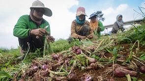UU Cipta Kerja Diyakini Genjot Investasi Asing Pada Sektor Hortikultura