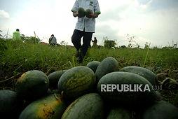 Akses Pangan di Indonesia Masih Sering Luput dari Perhatian