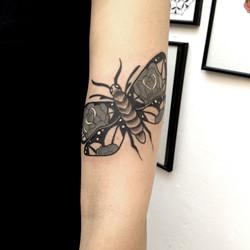 papillon kim.jpg