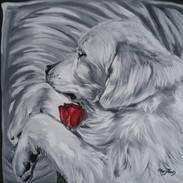 Beerdigung Hund