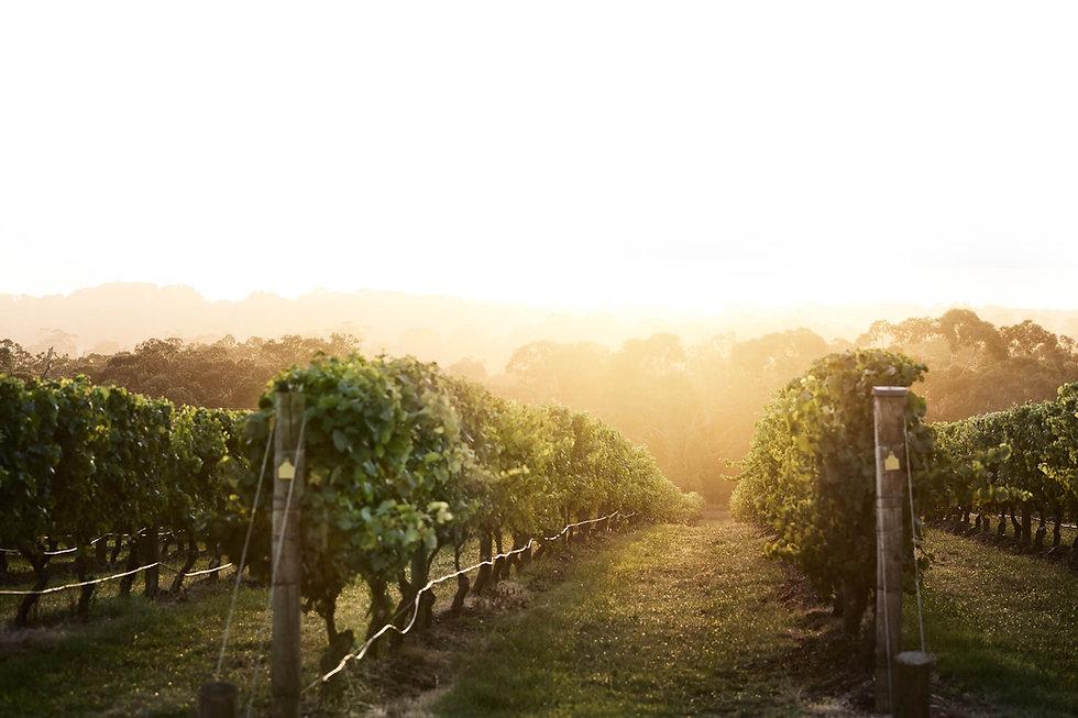 Premium_Winery_Tour_Experiences_Victoria
