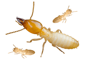 Download-Termite-PNG-Background-Image_ed