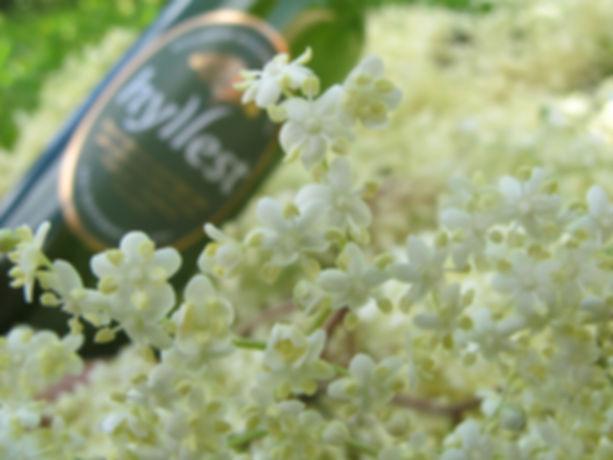 blomsterseng av sommer