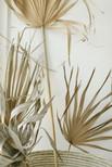 Dried Palm Leaves by Pampas Gal.jpg