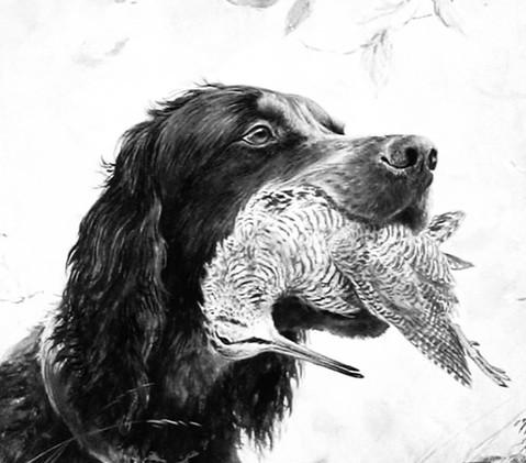 Igor et oiseau