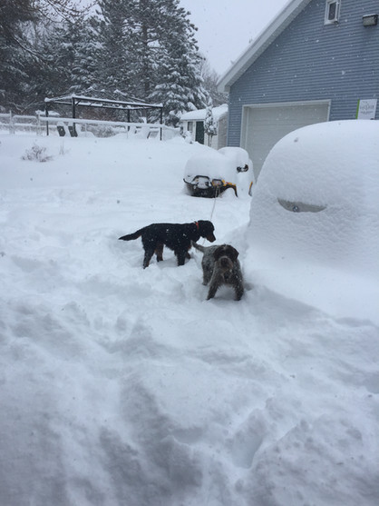 Korthals et la neige
