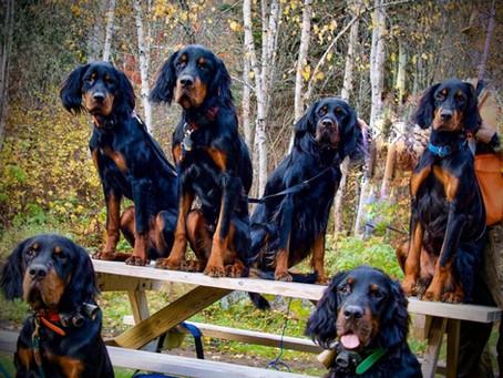Quels sont les aliments dangereux pour les chiens ?