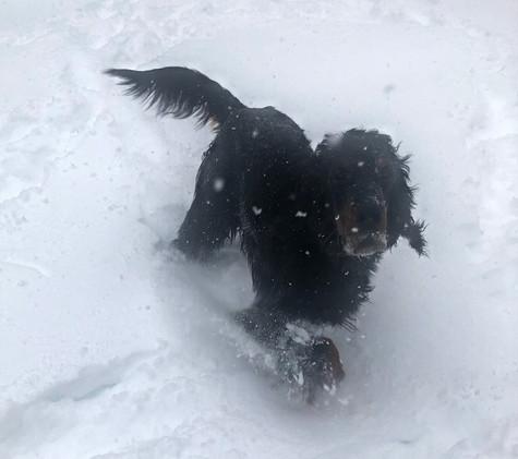 ISTWOOD dans la neige