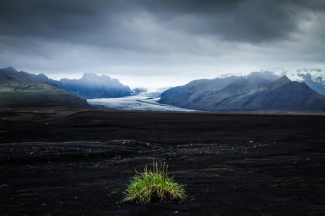 Life on a Barren Landscape