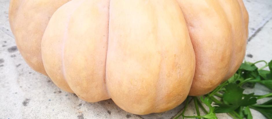 Vegetable of the Month - Pumpkin - October